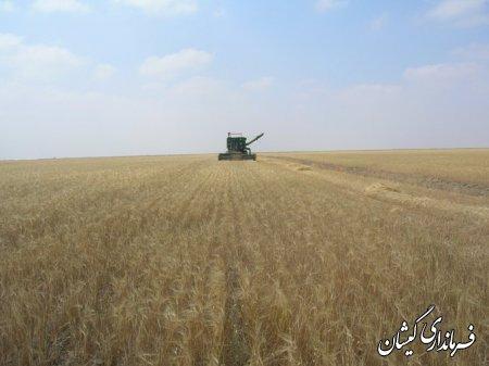 برداشت محصول جو درسطح اراضي كشاورزي شهرستان گميشان شروع شد