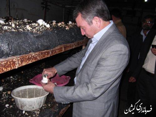 بازدید فرماندار گمیشان از کارگاه پرورش تولید قارچ