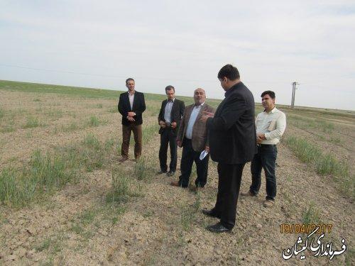 بازدید فرماندار گمیشان از سطح مزارع شمال شهرستان