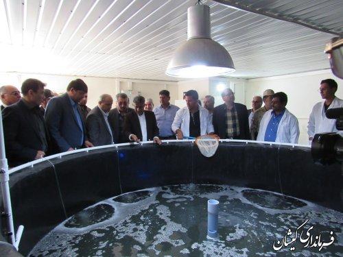 بازدیداستاندارگلستان ازکارگاه تولیدبچه میگو محک گمیشان