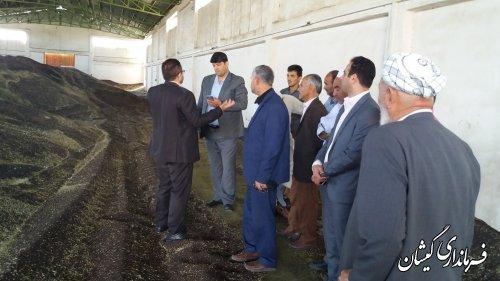تاکنون بیش از یک هزارو 700 تن کلزای کشاورزان شهرستان خریداری شده است