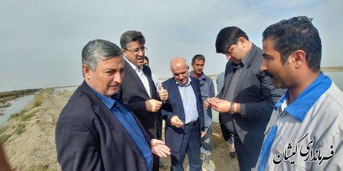 رییس سازمان امور اراضی کشور از سایت میگوی گمیشان بازدید کرد