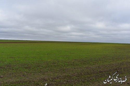 تاکنون 50هزارو380هکتار از اراضی کشت پاییزه درسطح شهرستان سبز شده است