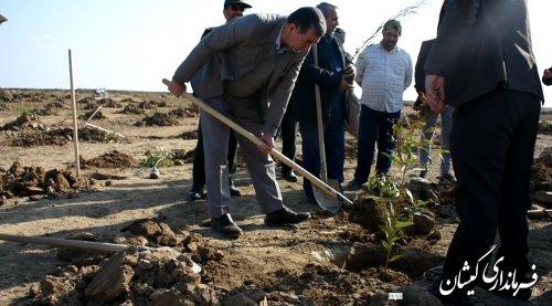 برگزاری پویش همگانی درخت کاری؛ برای ایرانی سبز